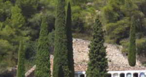 ¿Por qué se plantan cipreses en los cementerios? - Blog de NorteHispana Seguros